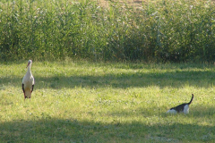 153_storch_18-07-06