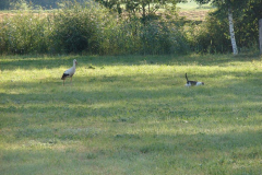 154_storch_18-07-06