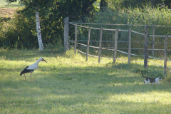 155_storch_18-07-06