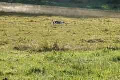 156_storch_18-07-06