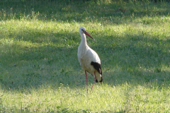 157_storch_18-07-06