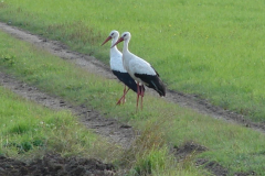 162_storch_09-08-06