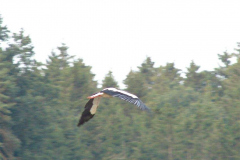 165_storch_09-08-06