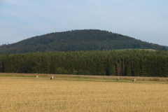 168_storch_09-08-06