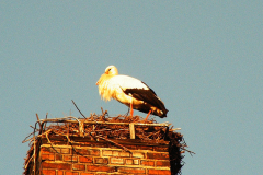 storch_20-03-06_001