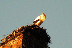 storch_20-03-06_003