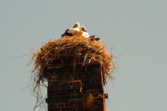 familie_storch_2005_03