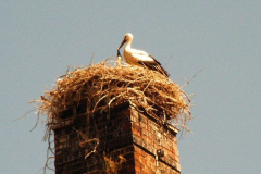 familie_storch_2005_04