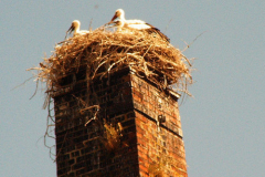 familie_storch_2005_05