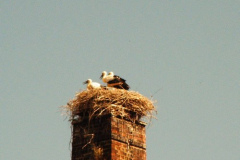 familie_storch_2005_06