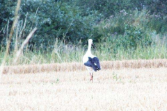 storch_20-07-04_02