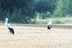 storch_20-07-04_04