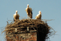familie_storch_2005_10