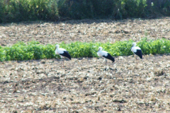 familie_storch_2005_11