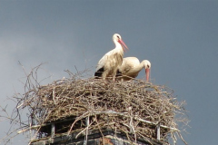 storch_19-05-06_002