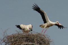 storch_19-05-06_003