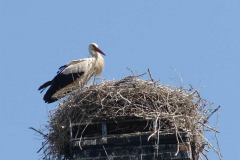 110_storch_19-06-06