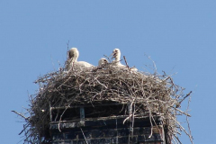 112_storch_19-06-06