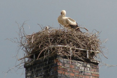 30_storch_23-05-06