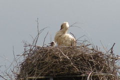 31_storch_23-05-06