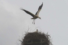 33_storch_23-05-06