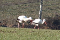storch_23-02_01