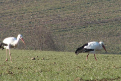 storch_23-02_05
