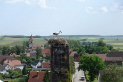 storch_0003