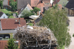 storch_0004