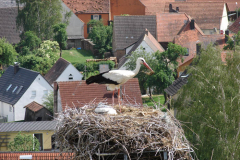 storch_0005