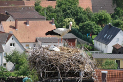 storch_0006