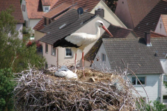 storch_0007