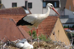 storch_0008