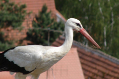 storch_0009