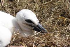 storch_0018