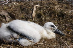 storch_0019