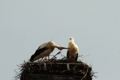 familie_storch_2005_18-1