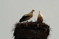 familie_storch_2005_19-1