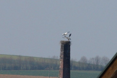 storch_001-1