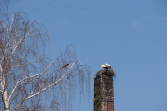 storch_002-1