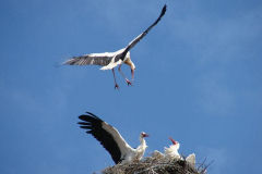 storch_006-1