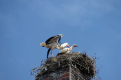 storch_008-1