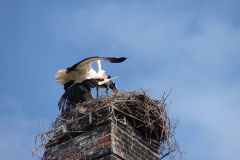 storch_017-1