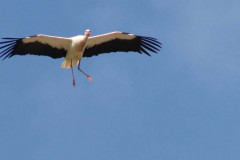 storch_022