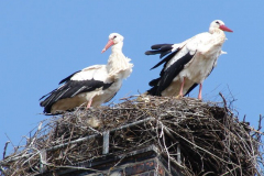 storch_025