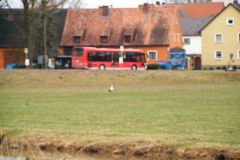 storch_20-03-06_003-1