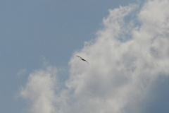 storch_28-04_001