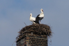 storch_001-4