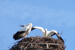 storch_002-4