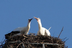 storch_005-4